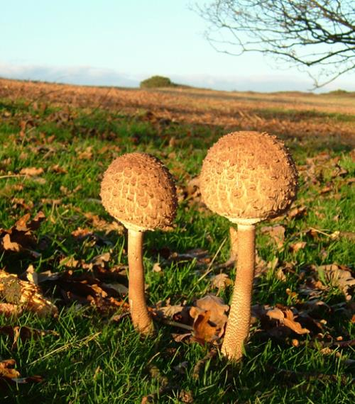 Fungi on the South Downs (JC)